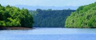 keindahan mangrove nya